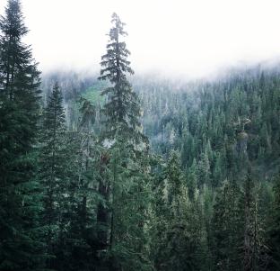 Washington Mists