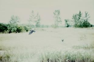 Praybirds, © Nicole Mark 2009