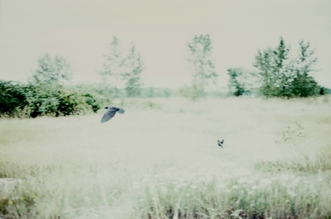 Praybirds, © Nicole Mark 2009