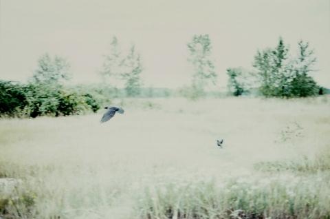 35mm Flight