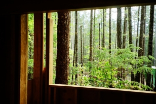 Cabin Window I
