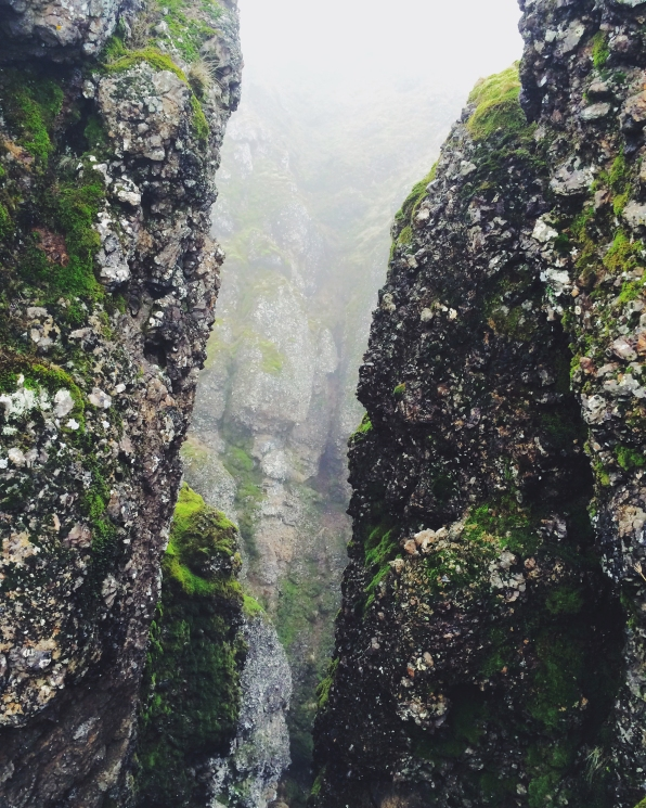 Moss and Mist