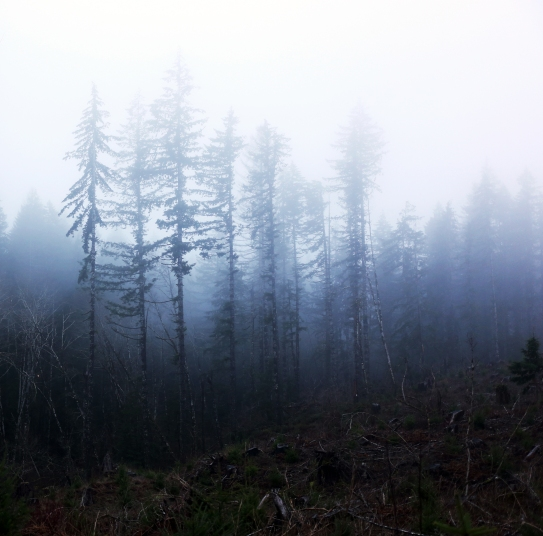 PNW Stand