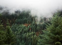 PNW Mists III