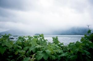 Nuchatlitz Fog II