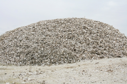 Shell Pile, Oregon Coast