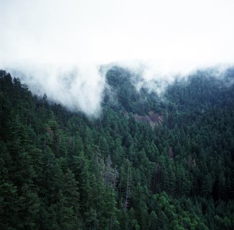 Mist Hill