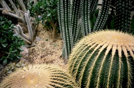 Allen Garden's Cactus
