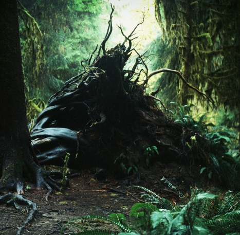 Hoh Rainforest Roots