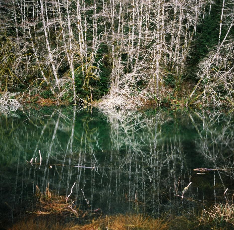 Hoh Rainforest Marsh