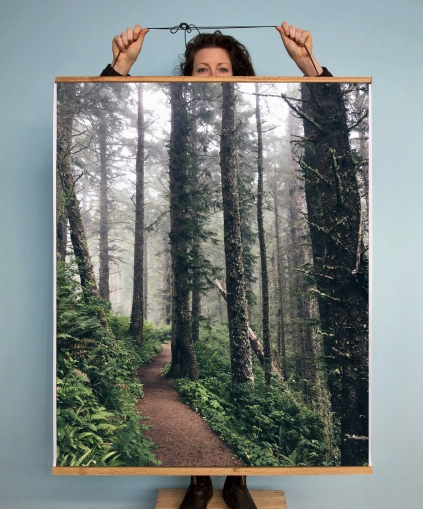 CapeLookout_ForestPath_Display