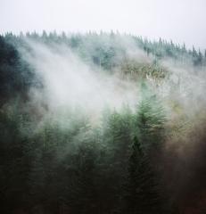 Angel's Rest Mist