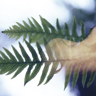 Fern Spine