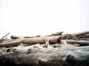 Drift Wood 35mm