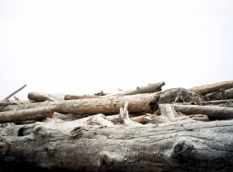 Drift Wood 35mm