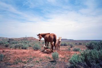 Horses & Goat, UT