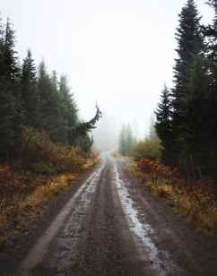 Willamette National Forest Road