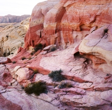 Nevada Pink Canyon